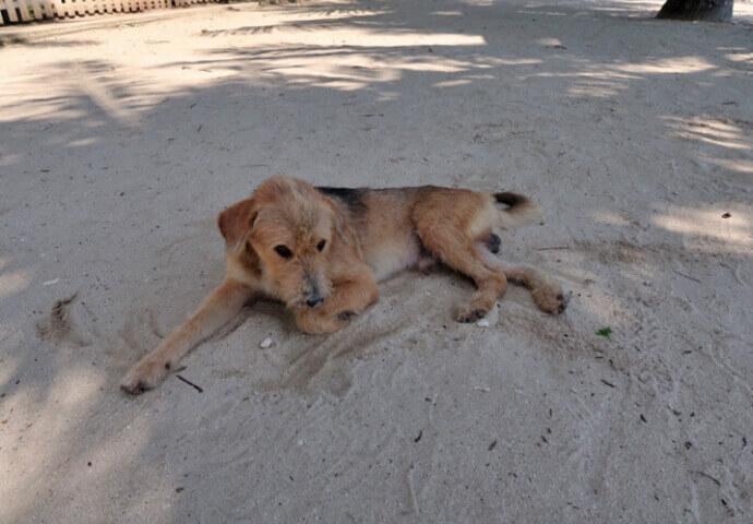犬も日陰で休んでいました。