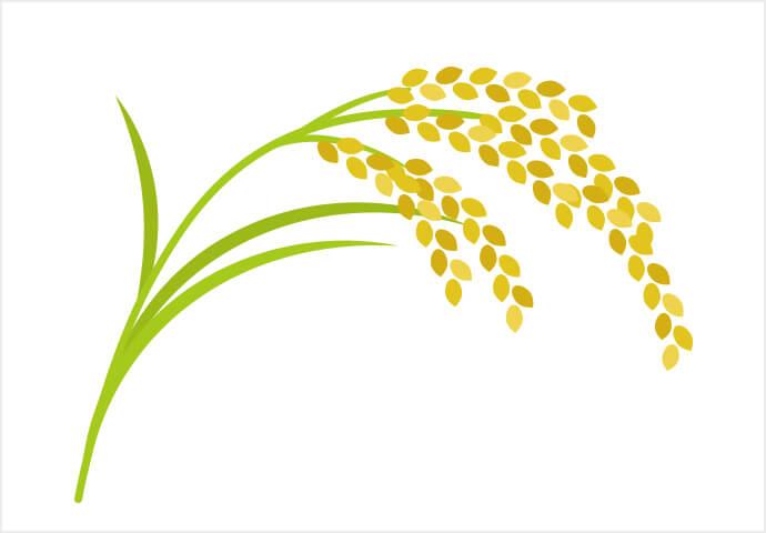 国家食糧庁が米輸入のための公開競売 を延期、対して砂糖は20万トンの輸入へ