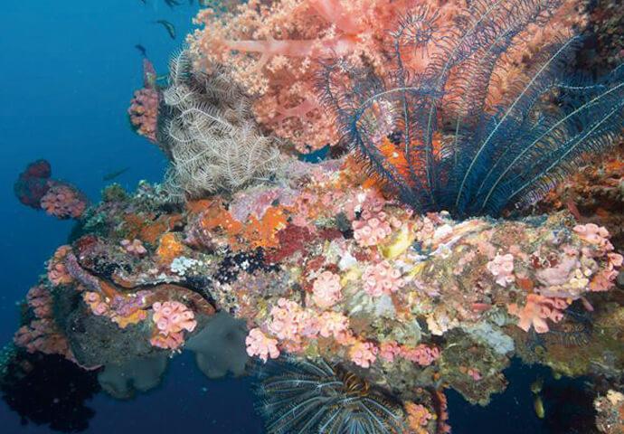 広がるホワイトサンドとコバルトブルーの海…魅惑のリゾート島【Malapascua マラパスクア島】