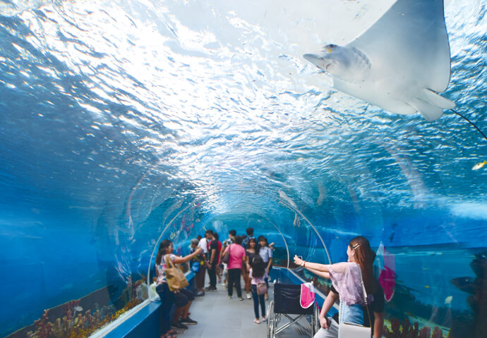 The largest aquarium in the Philippines is now here in Cebu! Fun-filled Cebu  Ocean Park